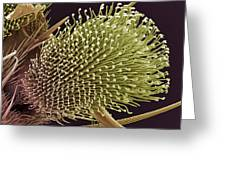 Pulvilli On A Fly's Foot, Sem Greeting Card by Steve Gschmeissner