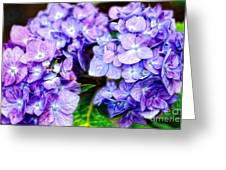Purple Hydrangea Greeting Card by Gina Cormier