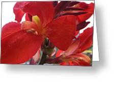 Red Canna Lily Greeting Card by Sandi Floyd