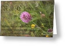 Red Clover Greeting Card by Carole Lloyd