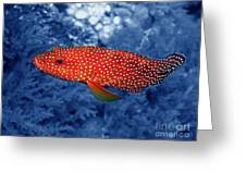 Red Coral Cod Greeting Card by Serena Bowles