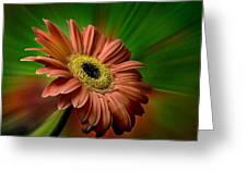 Red Gerber Daisy Greeting Card by Bob Mulligan