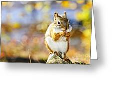 Red Squirrel Greeting Card by Elena Elisseeva