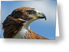 Red-tailed Hawk Greeting Card by Alan Lenk