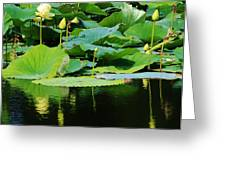 Reflecting Waters Greeting Card by Bruce Bley