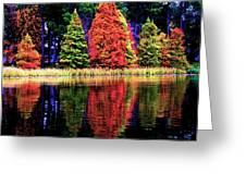 Reflections Greeting Card by Carrie OBrien Sibley