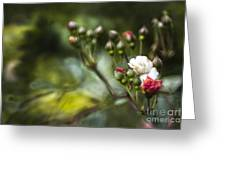 Rose In Bloom Greeting Card by Angel  Tarantella