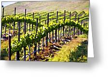 Rows Of Vines Greeting Card by Patricia Stalter