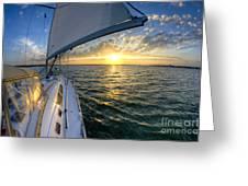 Sailing Sunset Charleston Sc Beneteau 49 Greeting Card by Dustin K Ryan