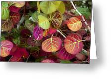 Sea Grape Greeting Card by Joseph G Holland