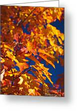 Sierra Autumn Leaves In Orange And Gold Greeting Card by ELITE IMAGE photography By Chad McDermott