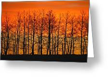 Silhouette Of Trees Against Sunset Greeting Card by Don Hammond