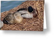 Sleeping Ducks Greeting Card by Valia Bradshaw
