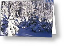 Snow-covered Pine Trees On Mount Hood Greeting Card by Natural Selection Craig Tuttle