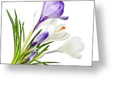 Spring Crocus Flowers Greeting Card by Elena Elisseeva