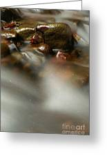 Stones In River Greeting Card by Odon Czintos