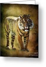 Sumatran Tiger  Greeting Card by Saija  Lehtonen