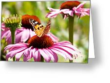 Summertime  Greeting Card by Angela Doelling AD DESIGN Photo and PhotoArt