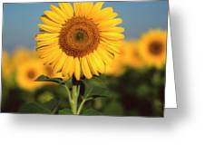 Sunflower Greeting Card by Bernard Jaubert