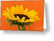Sunflower Closeup Greeting Card by Elena Elisseeva
