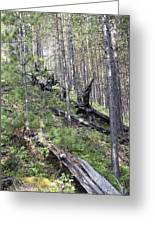 Tunguska Forest Greeting Card by Ria Novosti