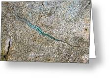 Turquoise Worm Greeting Card by Robert Knight