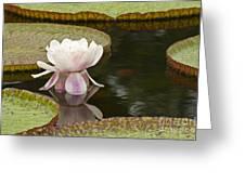 Victoria IIi Greeting Card by Heiko Koehrer-Wagner