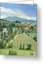 Vineyards On A Hillside Greeting Card by Rob Tilley