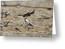 Wading Bird Greeting Card by Douglas Barnard