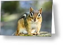 Wild Chipmunk Greeting Card by Elena Elisseeva