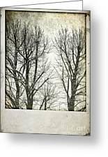 Winter Trees Greeting Card by Silvia Ganora