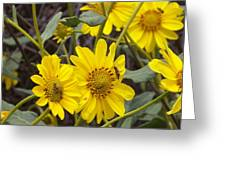 Yellow Daisy Greeting Card by Steve Huang
