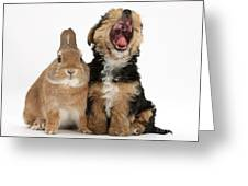 Yorkshire Terrier Pup With Rabbit Greeting Card by Mark Taylor
