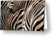 Zebra Stripes Greeting Card by Joseph G Holland
