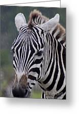 Zebra Greeting Card by Thomas Marchessault