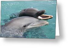 Atlantic Bottlenose Dolphins Greeting Card by Dave Fleetham