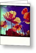 Field Of Poppies Greeting Card by Bernard Jaubert