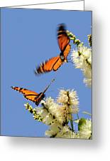 Butterflies Greeting Card by Marc Bittan