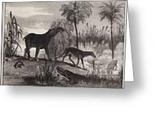 1837 Extinct Prehistoric Animals Paris Greeting Card by Paul D Stewart