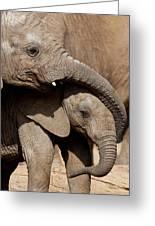 African Elephant Loxodonta Africana Greeting Card by San Diego Zoo