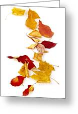 Autumn Leaves Greeting Card by Elena Elisseeva