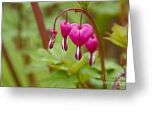 Bleeding Hearts Greeting Card by Sean Griffin