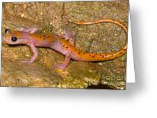 Cave Salamander Greeting Card by Dante Fenolio