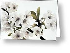 Cherry Blossoms Greeting Card by Frank Townsley