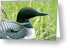 Common Loon, La Mauricie National Park Greeting Card by Philippe Henry