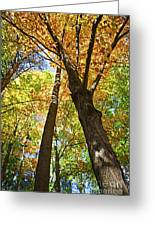 Fall Forest Greeting Card by Elena Elisseeva