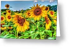 Field Of Dreams Greeting Card by Debbi Granruth