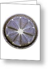 Fossil Diatom, Light Micrograph Greeting Card by Frank Fox