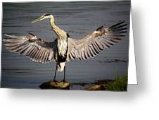 Great Blue Heron In The Marsh Greeting Card by Paulette Thomas