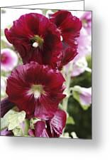 Hollyhock (alcea Rosea) Greeting Card by Dr Keith Wheeler
